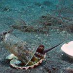 octopus plastic beker