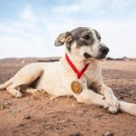 cactus marathon hond