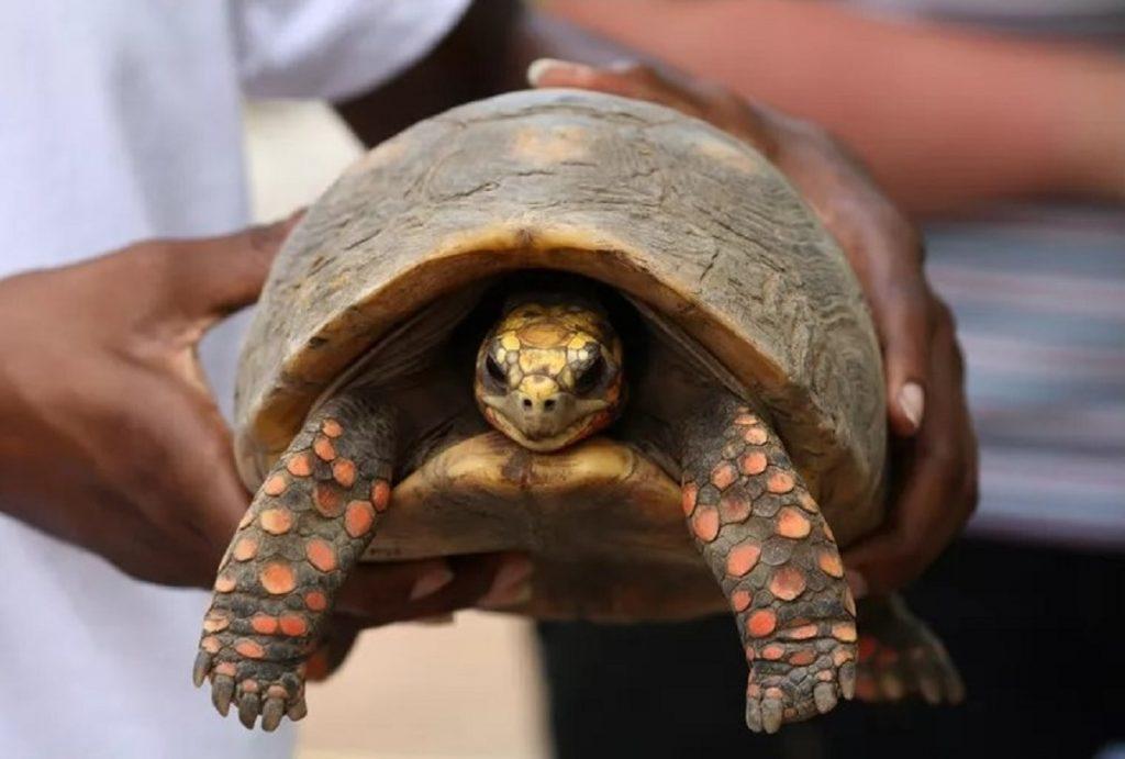 schildpad 1982 gevonden