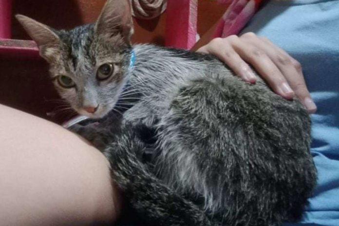 geredde kitten onherkenbaar