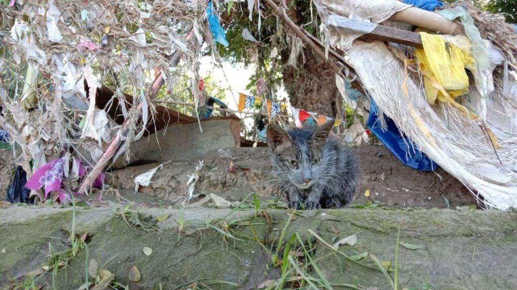 kitten onherkenbaar